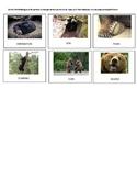 UNIT STUDY ON BEARS