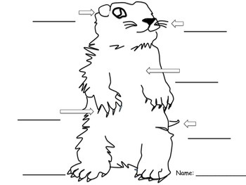 U.S. Groundhog Unit