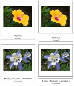 US State Flowers: 3-Part Cards