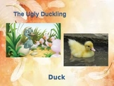 Ugly Duckling and Duck Power Point