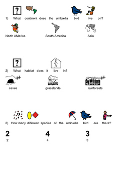 Umbrella Bird - Picture supported text review article questions facts info