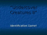 Undercover Animals - Adapted to Hide in Plain Sight PPT
