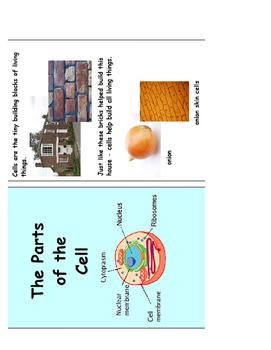 Understanding Cells Flashcard One
