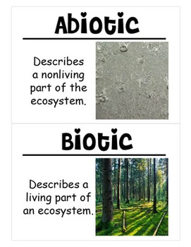 Understanding Ecosystems Science Vocabulary Cards (Large)
