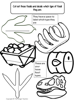Understanding Fossils - Complete Lesson