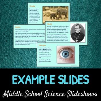 Understanding Genetics: A Life Sciences Slideshow!