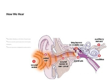 Understanding Hearing and Hearing Loss