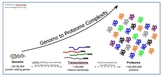Understaning Gene Expression: Genome to Proteome Completity Image