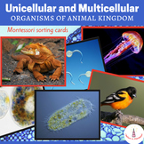Unicellular and Multicellular Organisms of Animal Kingdom Cards