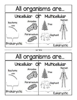 Unicellular or Multicellular