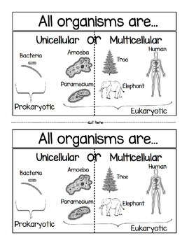 Unicellular or Multicellular
