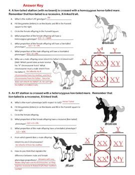 Unicorn Genetics Sex Linked Traits Punnett Squares Worksheet MendelianGeneticsBW