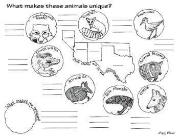 Unique Animals of the Southwest, California Treasures 5.5