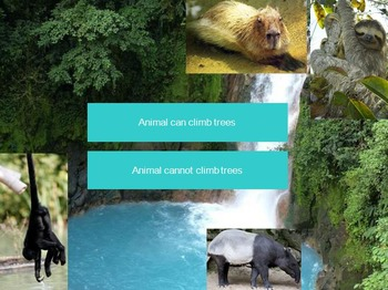 Rainforest Dichotomous Key