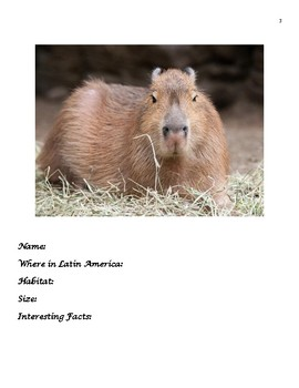 Unique animals of Latin America