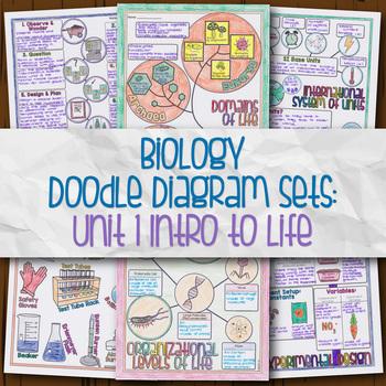 Unit 1 Biology Doodle Diagrams