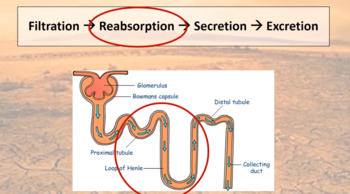 Unit 1 Biology Video 9: Desert Adaptations