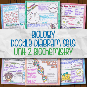 Unit 2 Biology Doodle Diagrams