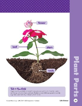 Unit 2: Parts of a Plant (Skill Sharpeners: Science)