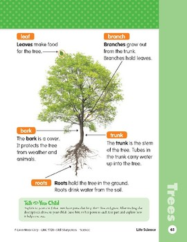 Unit 2: This Old Tree (Skill Sharpeners: Science)
