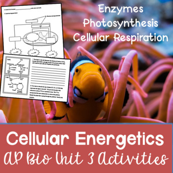 AP Biology Unit 3 Cellular Energetics Activities Packet