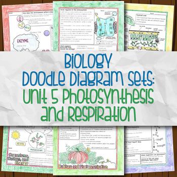 Unit 5 Biology Doodle Diagrams