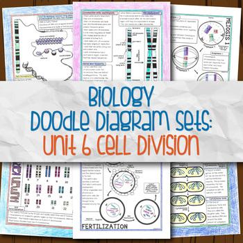 Unit 6 Biology Doodle Diagrams
