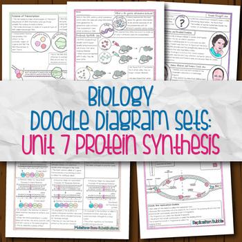 Unit 7 Biology Doodle Diagrams