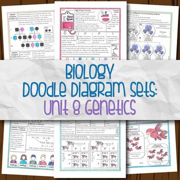 Unit 8 Biology Doodle Diagrams