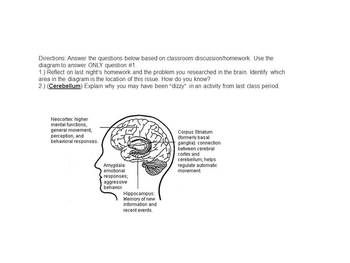 Unit Lobes Brain Hypothalamus Hippocampus Psychology High School