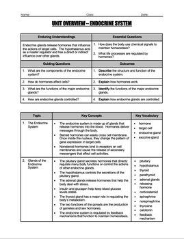 Unit Overview & Key Words - Endocrine System