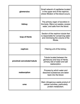 Unit Overview & Key Words - Urinary System