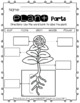 Unit Plants (Life Cycle)