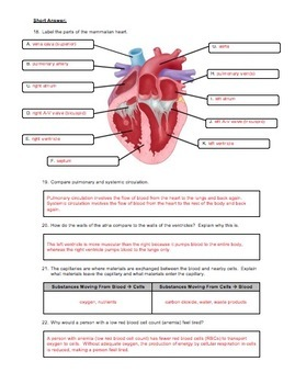 Unit Review - Circulatory System