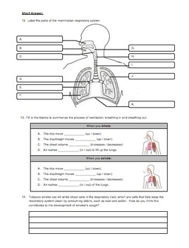 Unit Review - Respiratory System