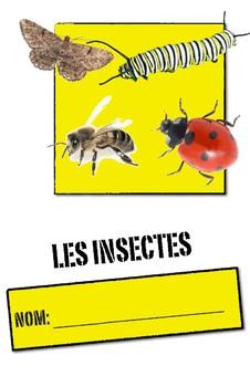 Unité: Les Insectes