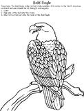 United States Symbols Bald Eagle
