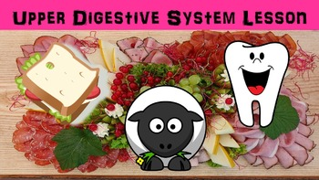 Upper Digestive System No Prep Lesson with Power Point, Work Page, and Activity