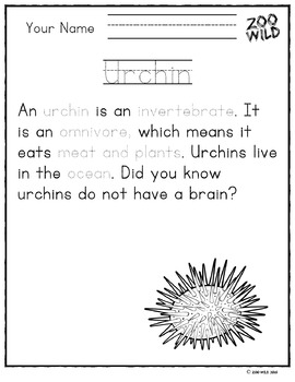 Urchin -- 10 Resources -- Coloring Pages, Reading & Activities