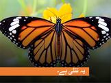 Urdu storybook- ت سے تتلي