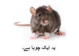 Urdu storybook- چ سے چوہا