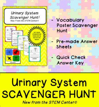 Urinary System Activities & Worksheets | Teachers Pay Teachers