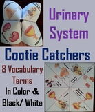 Urinary System Activity/ Foldable (Human Body Systems Review)