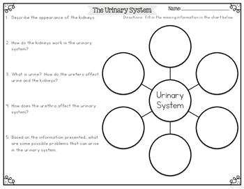 Urinary System Differentiated Nonfiction Reading Passages