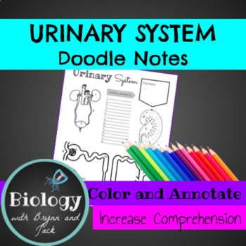 Urinary System Doodle Notes