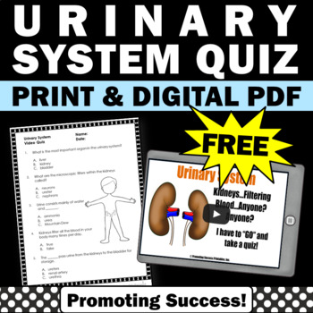 Free Urinary System Worksheet Human Body Systems Grade 5 Review