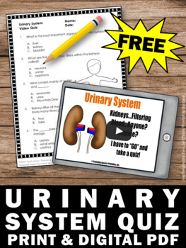 FREE Urinary System, Human Body Systems Worksheets by Promoting Success