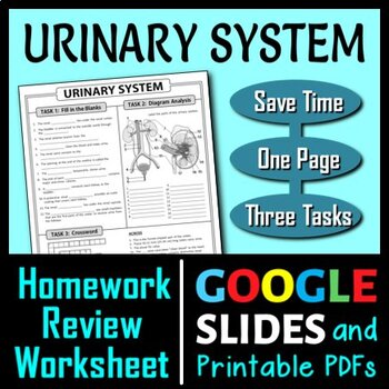 Urinary System Homework Review Worksheet / Test Prep {Editable}