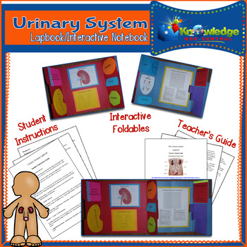 Urinary System Lapbook/Interactive Notebook