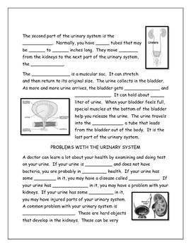 Urinary System Note Taking Guide